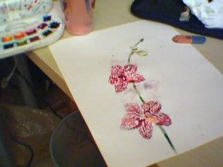 Cadeau bonus : mes orchidées de vendredi !!! Aquorchid2