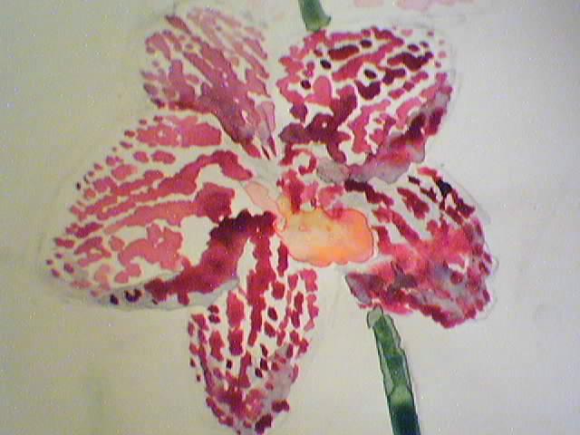 Cadeau bonus : mes orchidées de vendredi !!! Aquorchid3