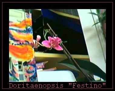 Cadeau bonus : mes orchidées de vendredi !!! Dtps