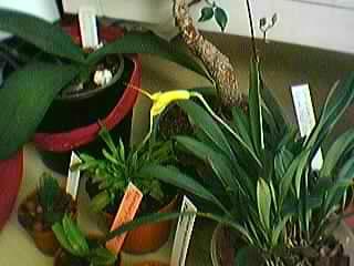 Cadeau bonus : mes orchidées de vendredi !!! Grp4