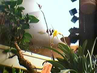 Cadeau bonus : mes orchidées de vendredi !!! Grp5