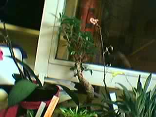 Cadeau bonus : mes orchidées de vendredi !!! Grp6