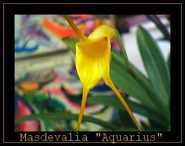 Cadeau bonus : mes orchidées de vendredi !!! Jvqm2