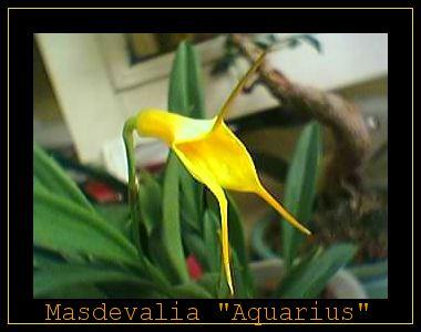 Cadeau bonus : mes orchidées de vendredi !!! Jvqm3