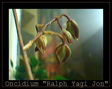 Cadeau bonus : mes orchidées de vendredi !!! Onc4